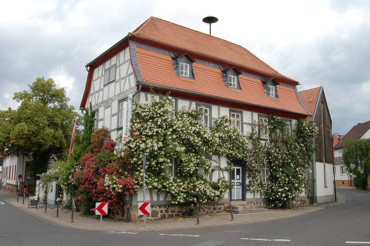 Rosenmuseum in Steinfurth